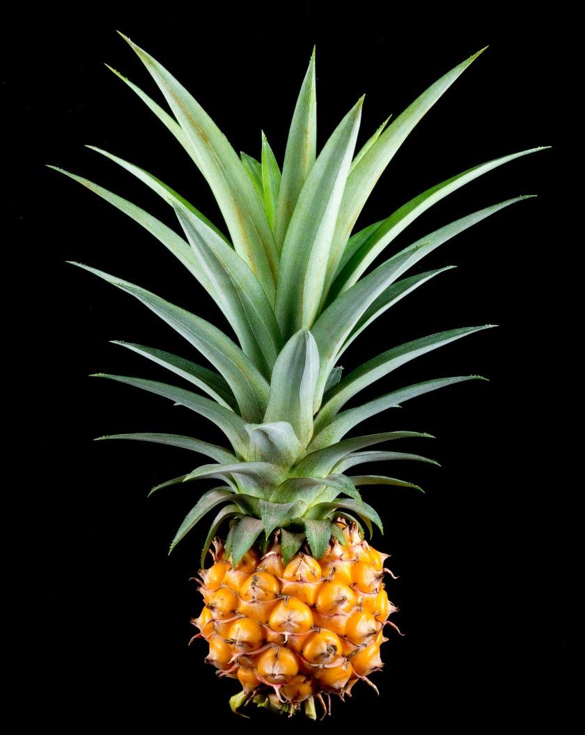 pineapple-382086_1920
